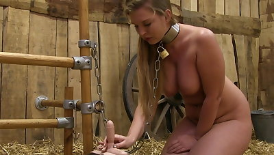 Milked above the sybian